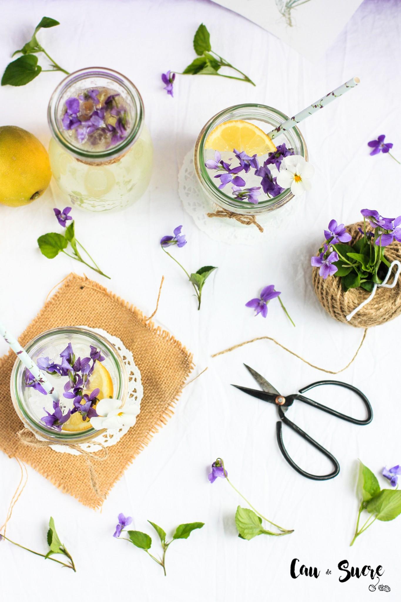 limonada_violetas-14